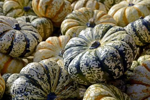 Squash Fall Superfoods