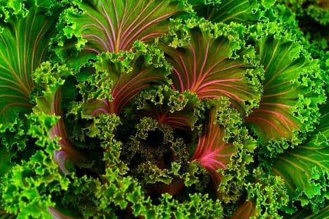what are the benefits of kale
