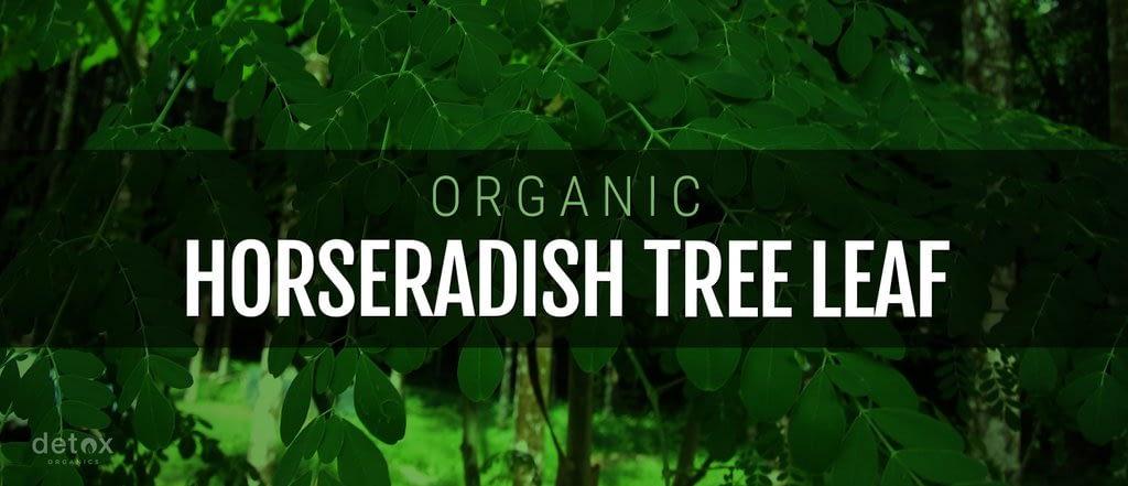 Organic Horseradish Tree Leaf
